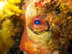 octopus eye - stock photo