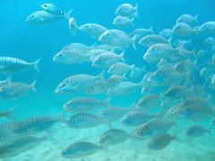 school of fish swimming - stock photo