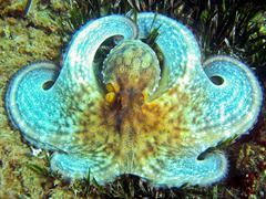 White octopus close-up Stock Photos