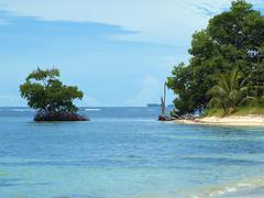 Mangrove and beach Stock Photos