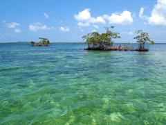 mangrove islands - stock photo