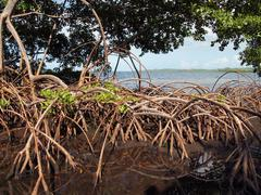 Mangrove view Stock Photos