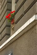 Red flowers on the window outdoors Stock Photos