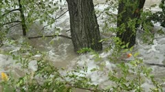 Flood river. Sunken trees. Stock Footage