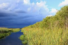Everglades in June - stock photo