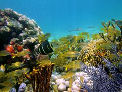 Underwater view in the caribbean sea Stock Photos