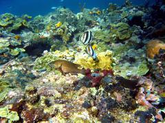 Coral reef in bocas del toro, punta hospital Stock Photos