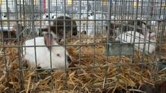 Rabbit farm Stock Footage