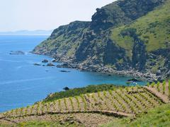 Mediterranean sea and vineyard Stock Photos