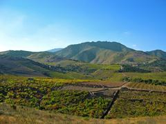 Vineyard in banyuls sur mer Stock Photos
