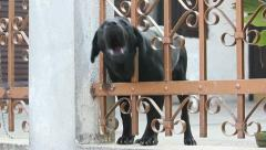 Dog Wide Stock Footage