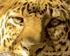 close-up leopard face front view vector - stock illustration