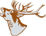 Stock Illustration of stag deer roaring.
