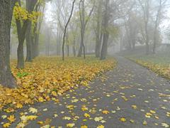 Stock Photo of Autumn alley with yellow foliage