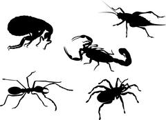 Flea cricket ant spider scorpion insect . Stock Illustration