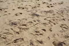 Footsteps on Sand - stock photo