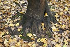 Autumn leaves around tree trunk Stock Photos