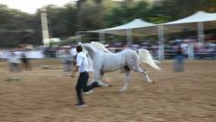 Handler shows off his fine Arabian horse during the national championship - stock footage