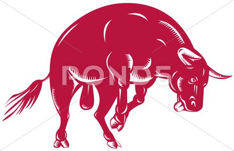 Stock Illustration of raging bull charging attacking