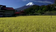 Mount Fuji And Rice Field Stock Footage