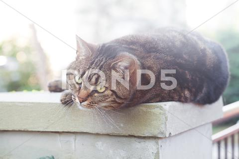 Stock photo of portrait of a beautiful striped cat outdoor
