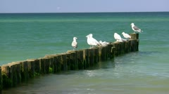 Seagulls on Wooden Groynes - Baltic Sea, Northern Germany Stock Footage