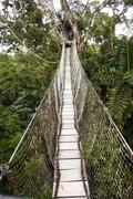 Canopy walkway strung between two rainforest trees in the ecuadorian amazon Stock Photos