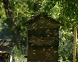 Beehives, bees 03 Stock Footage