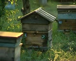 Stock Video Footage of Beehives, bees 01