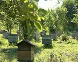 Stock Video Footage of Beehives 02