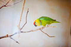 Kaunis värikäs papukaija lory eläintarhassa Kuvituskuvat