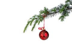 Isolated red Christmas ornament hanging from a pine branch Stock Photos