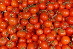 backgroung of tomatoes on the vine - stock photo