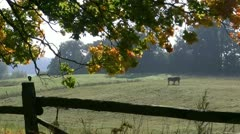 Horses on pasture - Indian Summer in Northern Germany Stock Footage