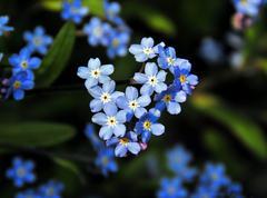 Blue Flowers 02 Stock Photos
