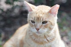 portrait of a street cat outdoor - stock photo