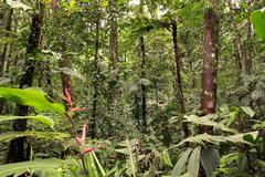 Interior of tropical rainforest with a heliconia plant in flower Stock Photos