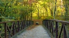 Bridge rock and autumn yellow Stock Footage