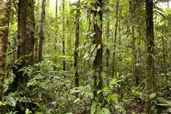 interior of topical rainforest in the ecuadorian amazon - stock photo