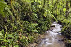 Interior of cloudforest at 2,200m altitude in the ecuadorian andes Stock Photos