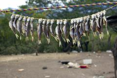 Fish hanging out to dry in the sun in southern ecuador Stock Photos