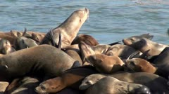 Elephant seals V6 Stock Footage