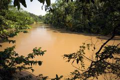 Amazonian river, the water brown with sediment, the rio tiputini in ecuador Stock Photos