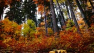 Stock Video Footage of wild mountain landscape in autumn