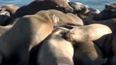 Elephant seals V3 Stock Footage