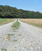 Stock Photo of field path