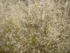Sere filigree grass closeup Stock Photos