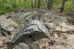 Petrified tree trunk (genus araucarioxylon, upper cretaceous) at puyango petr Stock Photos