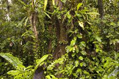 Interior of tropical rainforest in ecuador Stock Photos