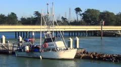 Boats and seals Stock Footage